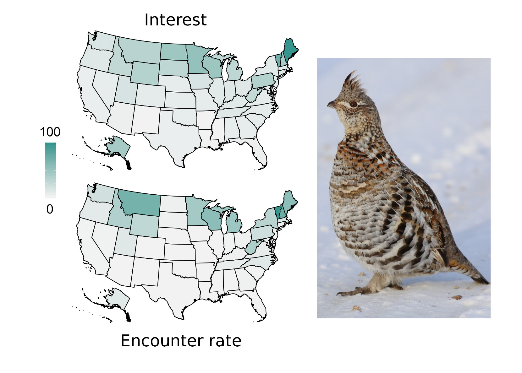 Haut niveau de corrélation observé pour le taux de rencontre de la gélinotte huppée et la répartition spatiale de l'intérêt sociétal