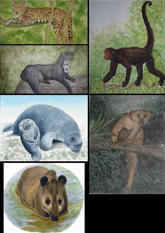 Le lamantin et la loutre géante d'Amazonie vivent dans l'eau, le tapir et le jaguar traversent fréquemment les cours d'eau, le singe araignée et le kinkajou n'ont pas de lien direct avec les cours d'eau. Pourtant, toutes ces espèces ont été détectées par ADNe. Illustrations © Ymelie Brosse (jaguar, loutre géante d'Amazonie, singe araignée et kinkajou) et © Déborah Federico (tapir et lamantin).