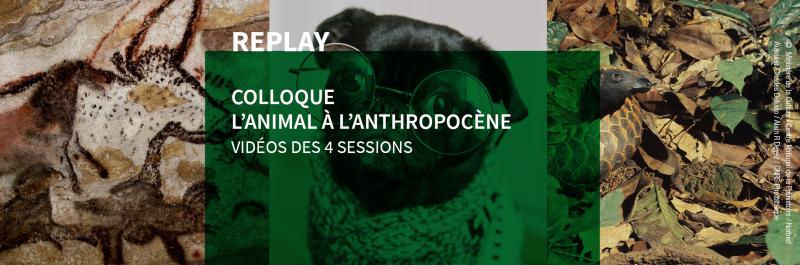 L'Animal à l'Anthropocène - 10 et 11 décembre 2020